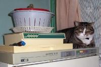 Die Katze hat die Ruhe weg ...
