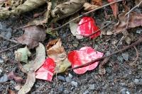 Rote Herzen im welken Laub ...