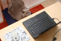 Katze vor dem Laptop