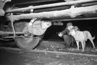 Fluchtversuch an der Zonengrenze / deutsch-deutschen Grenze, 50er Jahre