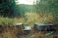 zugewachsener Kolonnenweg bei Regen