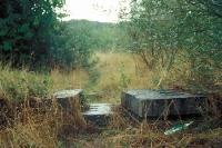 Kolonnenweg der ehemaligen innerdeutschen Grenze, das Grüne Band