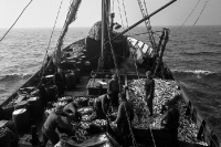 Fischkutter / Trawler auf hoher See, Ostsee 50er Jahre