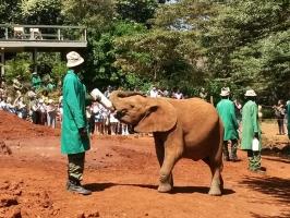 Elefanten in Nairobi