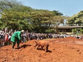 Nashorn in Nairobi