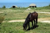 Betonbunker und grasendes Pferd bei Pogradec in Albanien