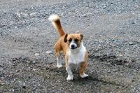 Straßenhund in einem tschechischen Dorf