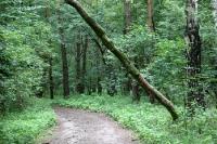 Waldweg in Märkisch Oderland / Brandenburg