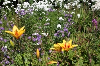 Blumenpracht in einem Garten