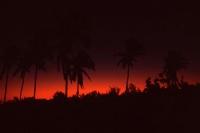 Palmen im leichten Morgenrot