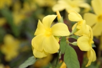 Blütenpracht und Farbtupfer im Tropenhaus des Botanischen Gartens - perfekt im grauen Winter!