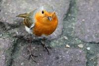 kleiner Vogel im Tropenhaus des Botanischen Gartens