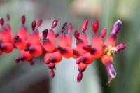 exotische Blumen im Tropenhaus des Botanischen Gartens