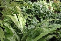 viel sattes Grün im Tropenhaus des Botanischen Gartens