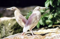 zwei Vögel sitzen in entgegengesetzter Richtung ...