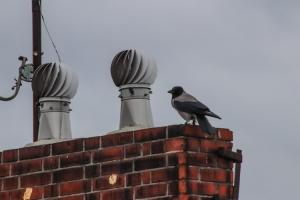 Rabe auf dem Dach ...
