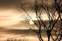 Wintersonne hinter den Bäumen
