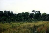Waldgebiet und Lichtung in Amazonien, Brasilien