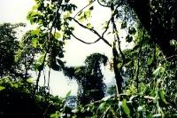 Atlantischer Regenwald in Brasilien