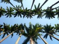 Palmen im Jardim Botanico in Rio de Janeiro