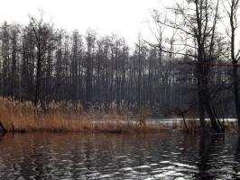 Landschaft an der Peene