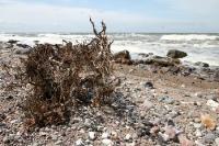 Steilküste und Steinstrand auf Hiddensee
