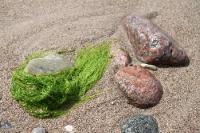 Steine am Strand von Hiddensee