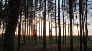 Waldstück in Estland