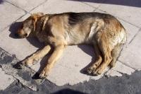 schlafender Straßenhund auf einem Bürgersteig in Piräus, Griechenland