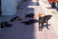 Straßenhunde auf einem Bürgersteig in Piräus, Griechenland