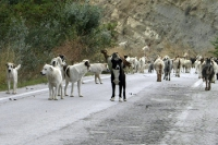 Rush Hour in Epirus
