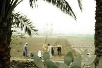 Feldarbeit am Nil in Ägypten