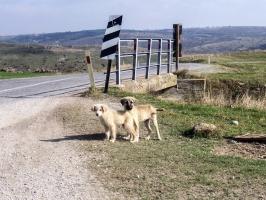 Knuffige Straßenhunde in der Türkei