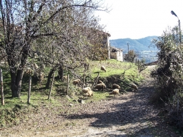 Perunika in Bulgarien