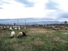 Route von Novo Selo (Mazedonien) nach Petric (Bulgarien)