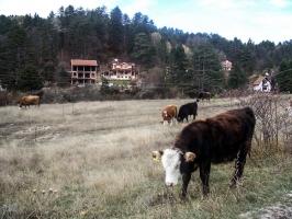 Straße von Berovo nach Strumica