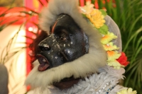 Verrückte, schräge und bunte Gesichter auf der ITB 2012 in Berlin