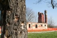 Einschusslöcher in einem Baum in Vukovar