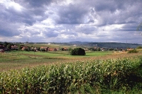 Maisfelder, Weinberge und sanfte Hügel bei Krizevci