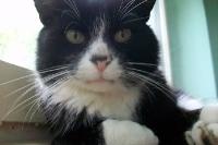 eine polnische Katze ;-)