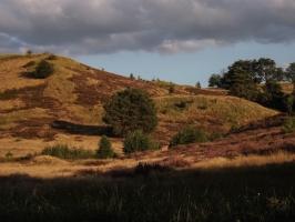Heide im Cedynski Park Krajobrazowy