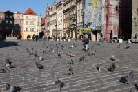 Kleines Bübchen jagt Tauben auf dem Marktplatz in der Altstadt von Poznan (Posen)