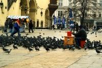 Tauben auf dem Marktplatz von Krakow / Krakau, Winter 2000