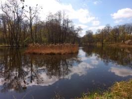 Park Las Dębiński in Poznań