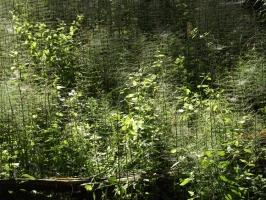 Urwald von Bieniszew