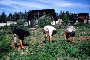 Feldarbeit auf einem Grundstück