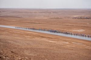 Cycling / Radsport / 1. Saudi Tour - 2.Etappe / 05.02.2020