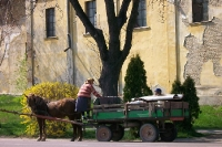 Pferdefuhrwerk im serbischen Bezdan