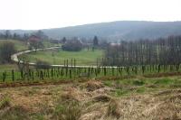 Weinanbau im östlichen Landesteil Sloweniens