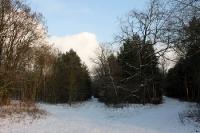 Winterlandschaft bei Hirschgarten / Berlin
